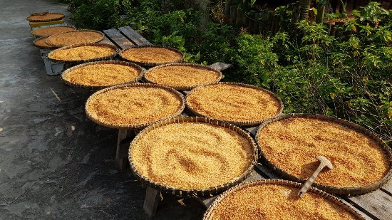 Peppery and Pleasant Phu Quoc