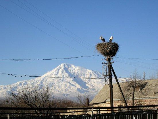 Ararat Province, أرمينيا: Весной в Араратскую долину возвращаются аисты