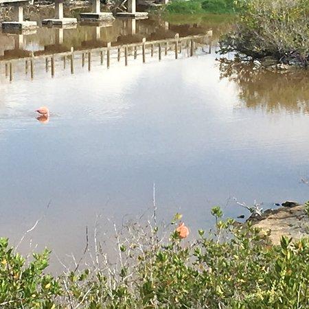 Iguana Crossing: photo3.jpg