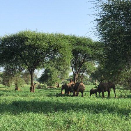 Tarangire National Park, Tanzânia: photo6.jpg