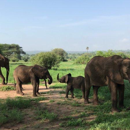 Tarangire National Park, Tanzânia: photo7.jpg