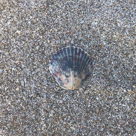 Waveland Beach : Beautiful day to go to the beach!