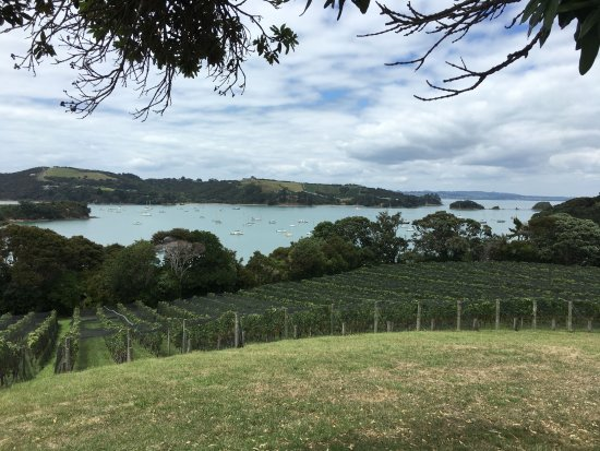 Waiheke Island, New Zealand: A view from one of the wineries.