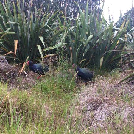 Tiritiri Matangi Island : photo3.jpg