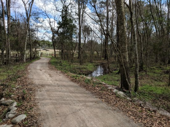 Alachua, FL: Tranquil walks like this one are throughout the property.