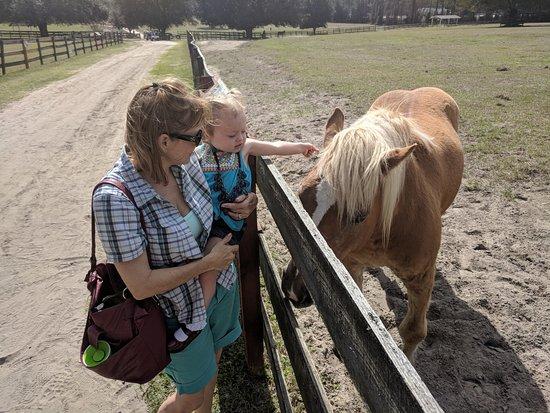 Alachua, FL: Nice horsey.