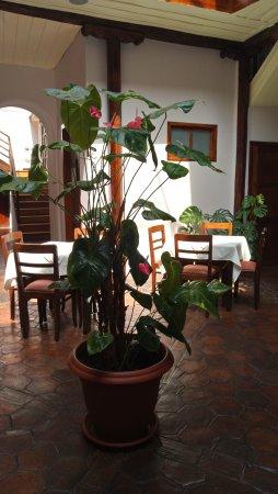 Casa Ordonez : internal courtyard