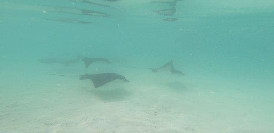 Summer Island Maldives Foto