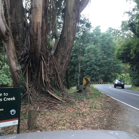 Monbulk, Australia: Kays Picnic Ground