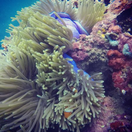 Cove Paradise Beach & Dive Resort: photo1.jpg