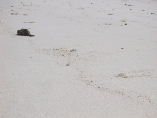 Hulhumale Beach照片
