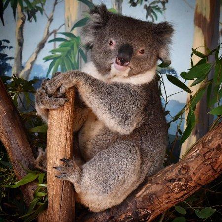 Grantville, Австралия: photo3.jpg