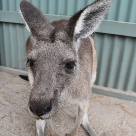 Grantville, Австралия: photo6.jpg