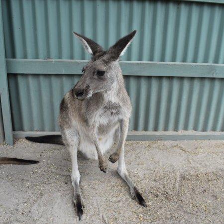 Grantville, Австралия: photo7.jpg