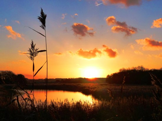 Shapwick, UK: Take a walk on the local Nature Reserves to see beautiful sunsets on the Avalon Marshes