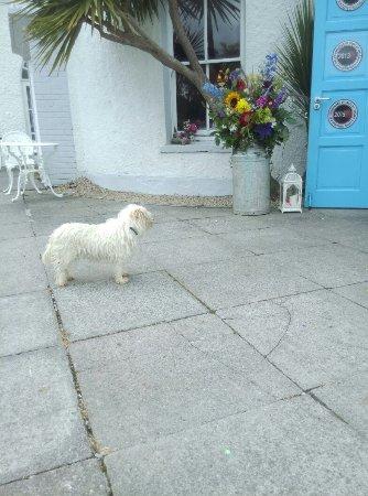 Innishannon, Irlanda: IMAG0201_large.jpg