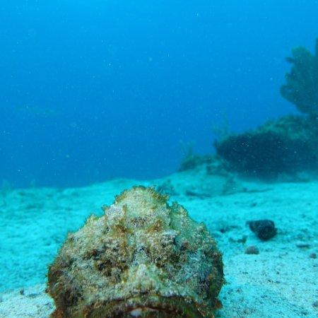 Diving Center Cayo Largo del Sur照片