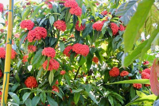 Green land spice garden