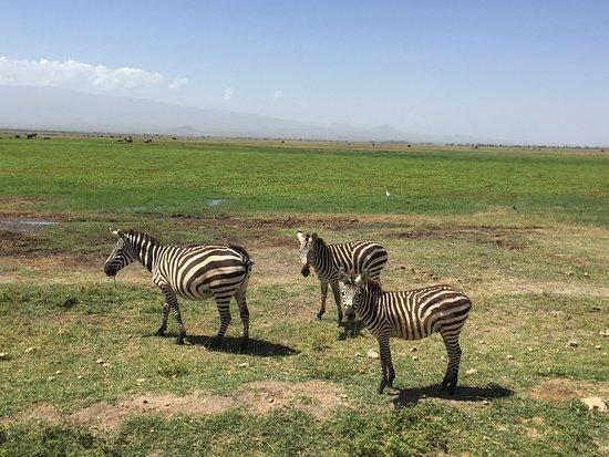 Amboseli National Park, Kenya: zebres