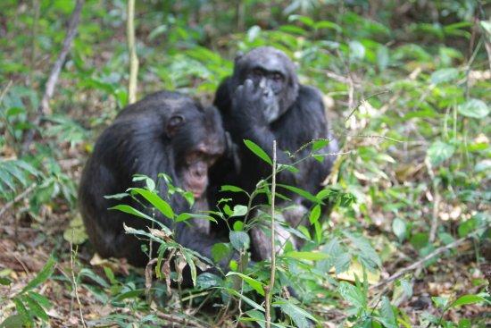 Kibale National Park, Uganda: chwilka zadumy