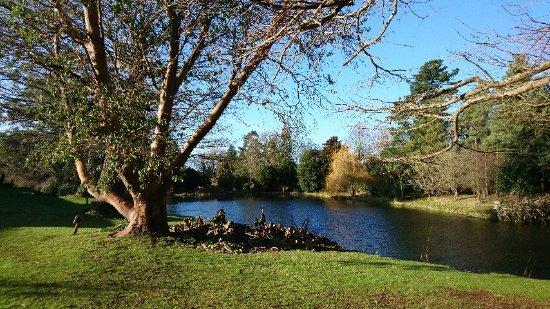 Thorpe le Soken, UK: DSC_0963_large.jpg
