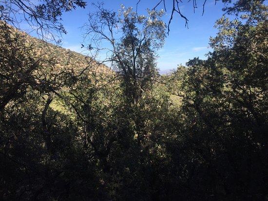 Hereford, AZ: photo1.jpg
