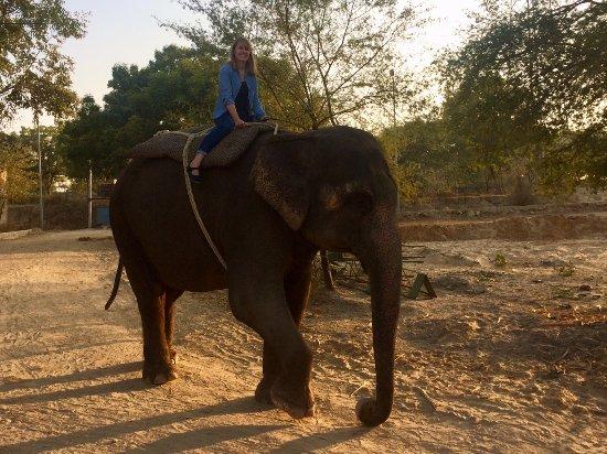 Elefantastic: Shaku and Emilie