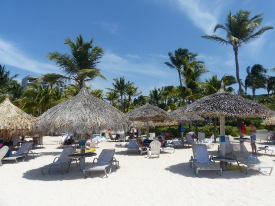 Hilton Aruba Caribbean Resort Palm Beach In Front Of The