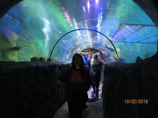 Sea Life Blackpool: Shark tank