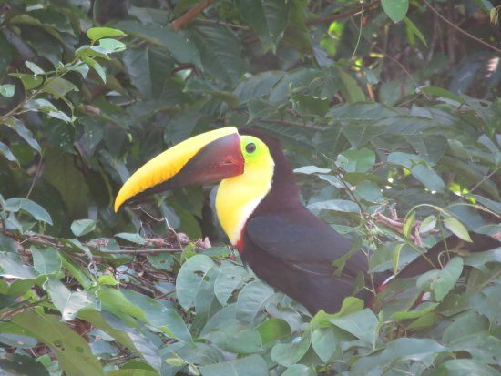 Casita Corcovado: Toucan at one of the many small beaches