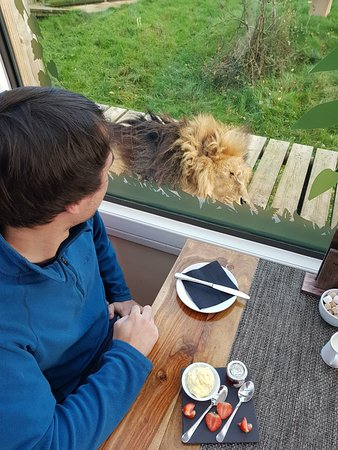 Smarden, UK: Cream tea on arrival with the lions