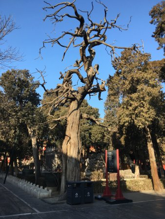 Forbidden City-The Palace Museum: The garden