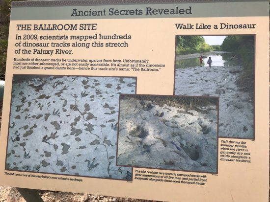 Dinosaur Valley State Park: Need drier & warmer weather to see this.