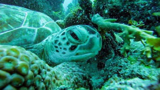 Scuba Dive Dominican