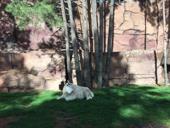 Williams, AZ: animal 2