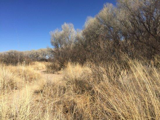 Hereford, AZ: photo8.jpg