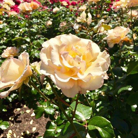 Parnell Rose Gardens: photo6.jpg