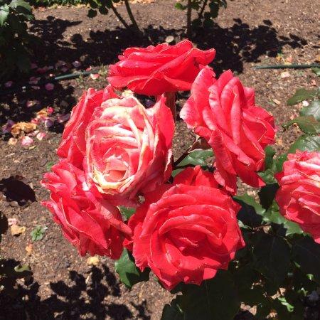 Parnell Rose Gardens: photo7.jpg