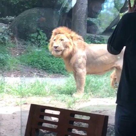 Tsavo Lion Restaurant: photo0.jpg