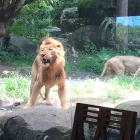 Tsavo Lion Restaurant: photo1.jpg