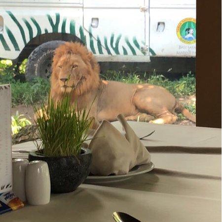 Tsavo Lion Restaurant: photo2.jpg