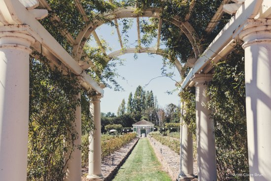 Petaluma, CA: View of The Belvedere through a rose covered pergola!