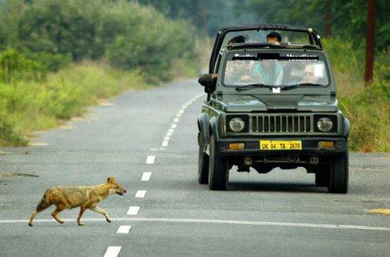 Exclusive Private Gypsy Safari in an...