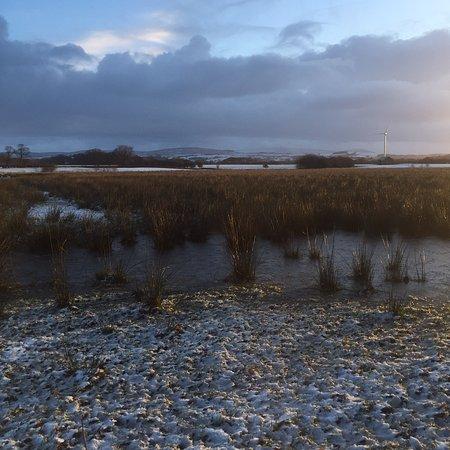 Garstang, UK: A Winters Morning at Humblescough Farm.