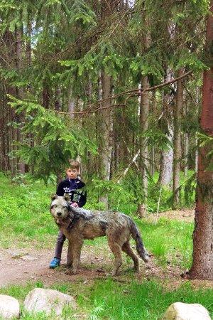 Verkhniye Mandrogi, Russia: Зоопарк ( волк , конечно , не живой