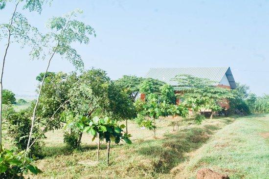 Oddamavadi, Sri Lanka: Ranch House