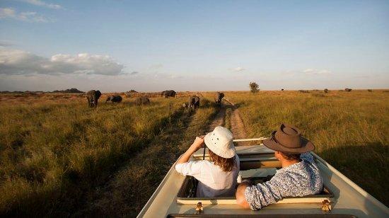 Arusha, Tanzania: Big five safari