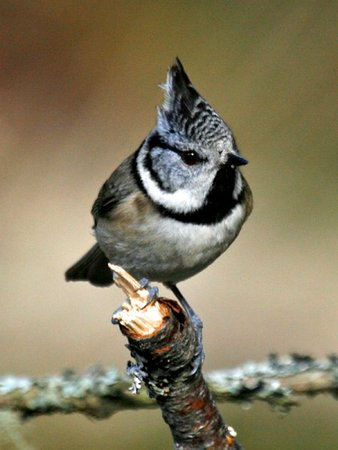 Aberlour, UK: Bird Watching in the Cairngorm National Park