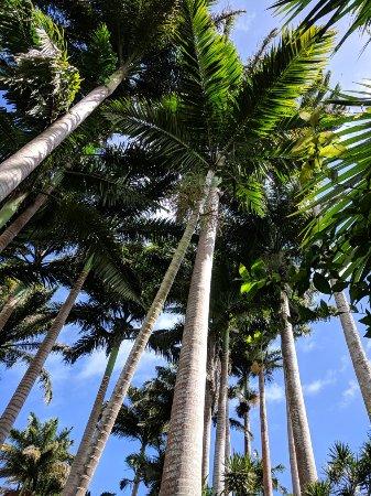 Saint Joseph Parish, Barbados: IMG_20180207_112518_large.jpg
