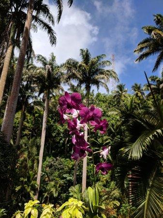 Saint Joseph Parish, Barbados: IMG_20180207_115340_large.jpg